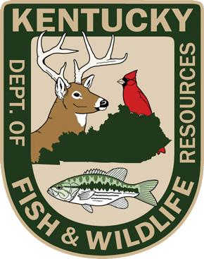 Logo hunting