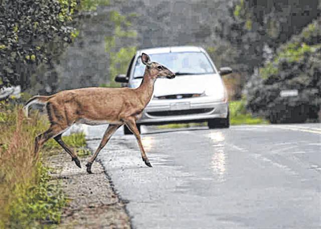 Instan a los conductores a estar alertas de venados y otros animales salvajes